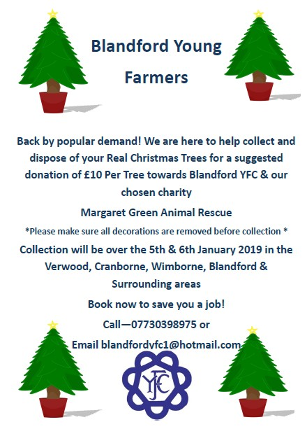 Blandford Christmas Tree Collection